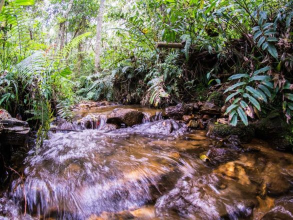 Agua, Juanito Laguna El Retiro