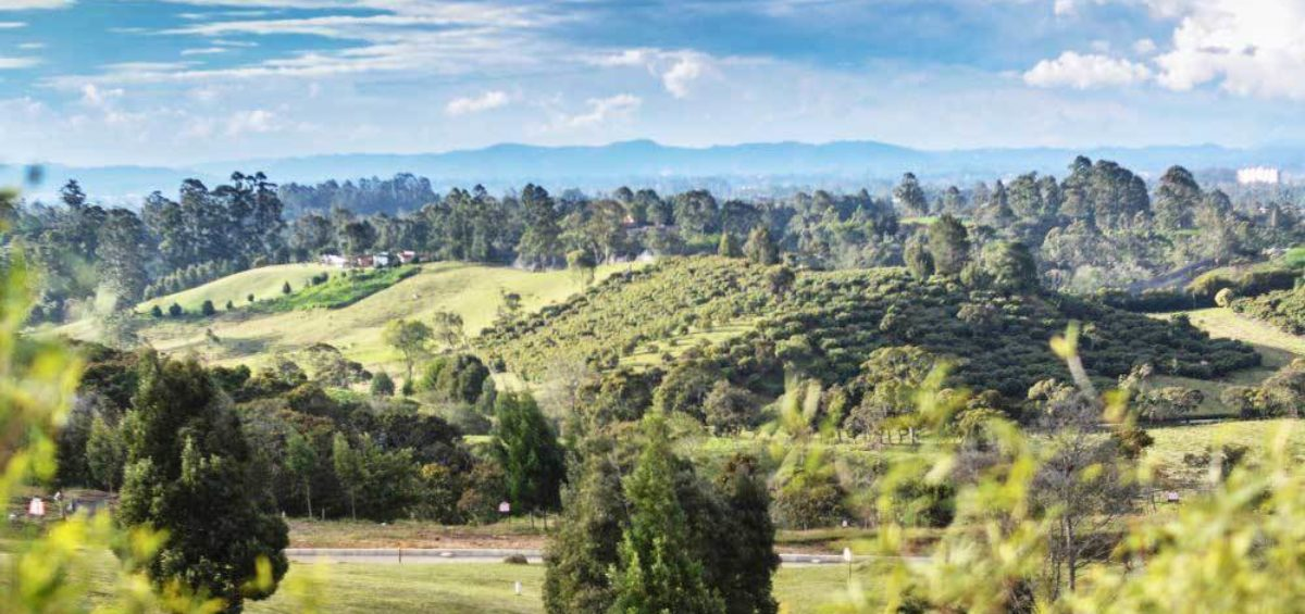 Árboles LLanogrande Hills, Constructora Serving - Servicios de Ingeniería